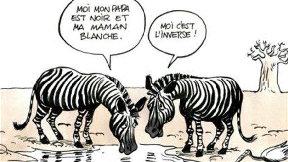 zebres-caricature-kichka
