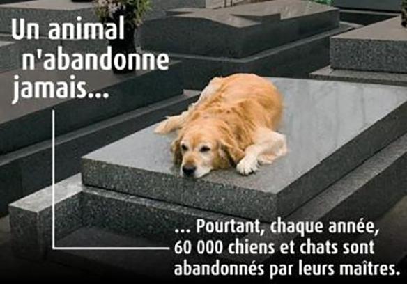 abandon de chien