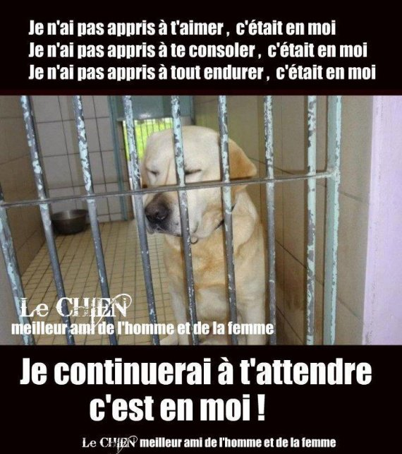 chiens-abandonne-attends-maitre-img