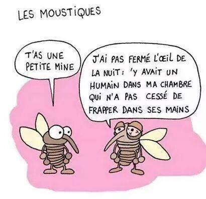 point de vue moustique