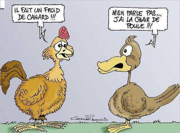 froid de canard chair de poule
