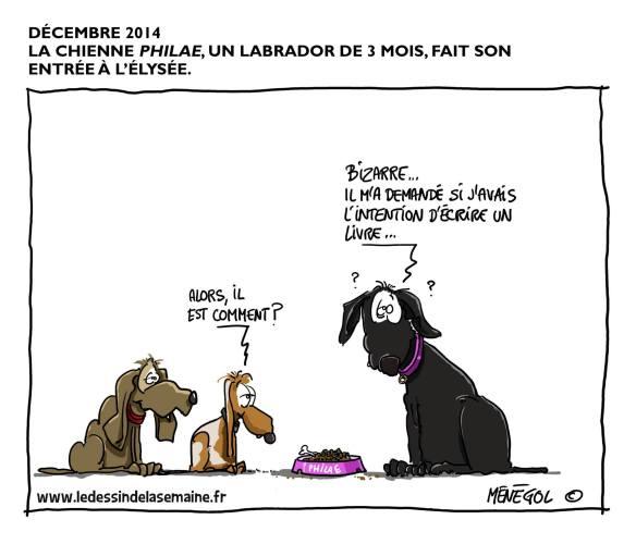 Philae, la chienne à Hollande