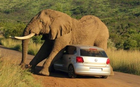 VW ça trompe